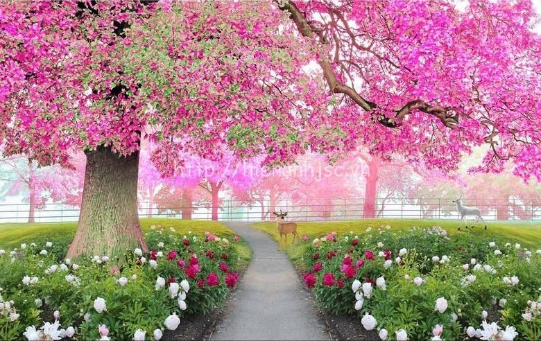 Tranh dán tường nền vườn hoa anh đào được ưa chuộng - 5D074