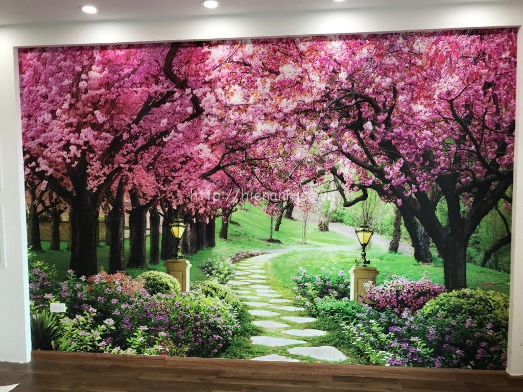 Tranh dán tường 5D hoa anh đào phòng khách của chú Thắng