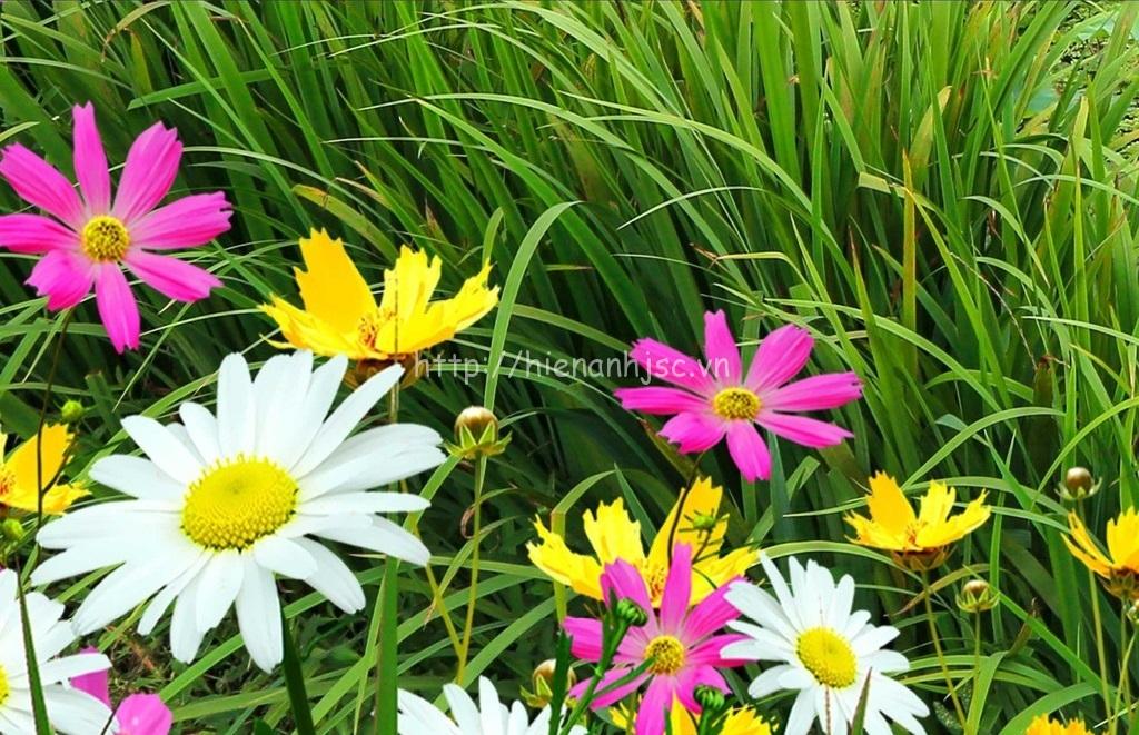 Chi tiết hoa cúc sắc nét của tranh sơn thủy hữu tình 5D148