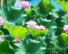 5D167-tranh-song-nui-son-thuy-huu-tinh