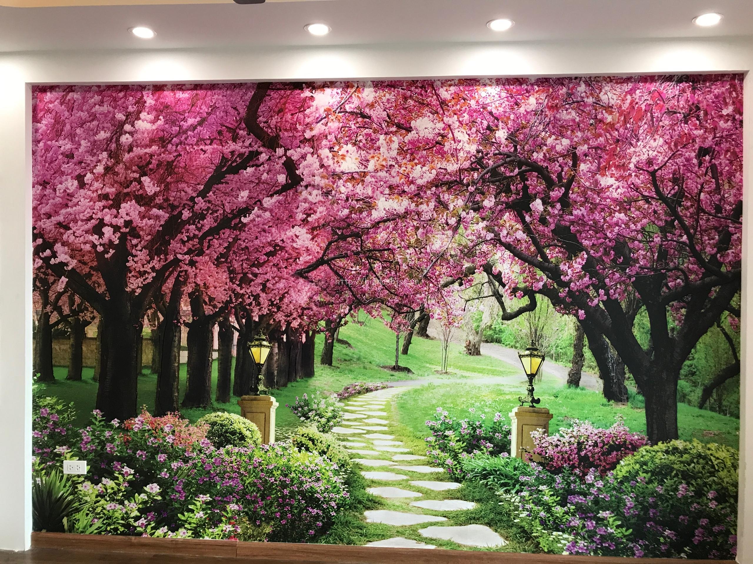 Tranh dán tường hoa anh đào của chú Thắng Hà Nội
